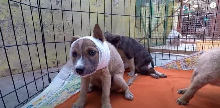 野生動物に襲われ瀕死状態の子犬をレスキュー後、元気な姿を見せてくれました
