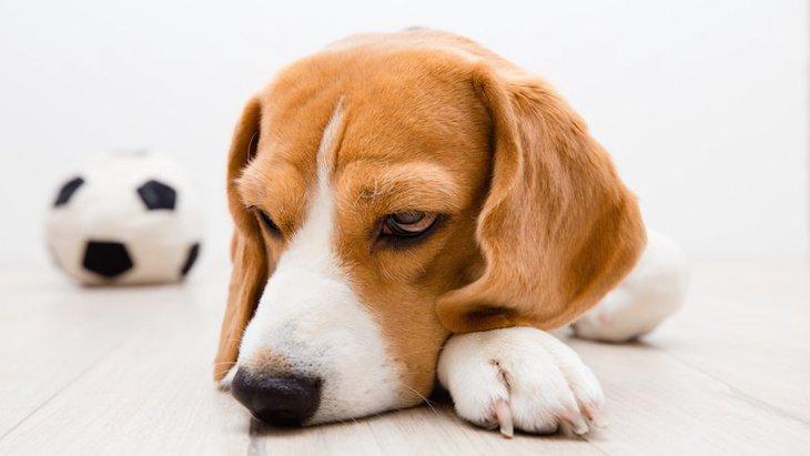 犬が飼い主に無関心なときの心理5つ