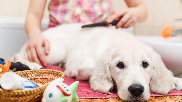 犬関連の資格を持っておくメリット4選