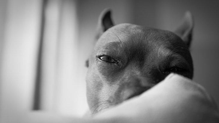 犬が脳震盪を起こした時の症状と対処法