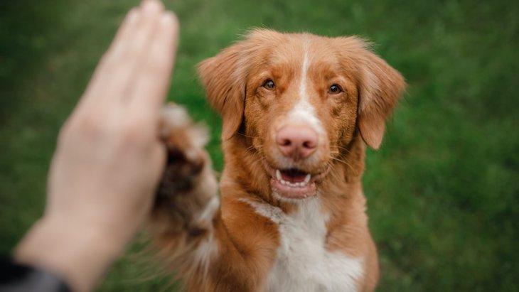 犬に芸を教えることは必要なの?必ず覚えさせるべき?