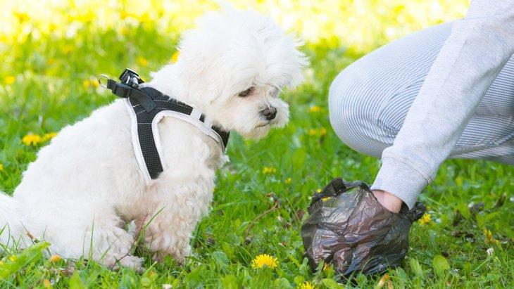 要注意?!犬のうんちが異常に臭くなってしまう原因とは