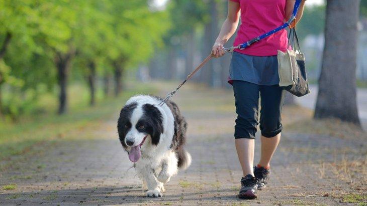 犬の散歩をする時に『ベストな飼い主の服装』とは?