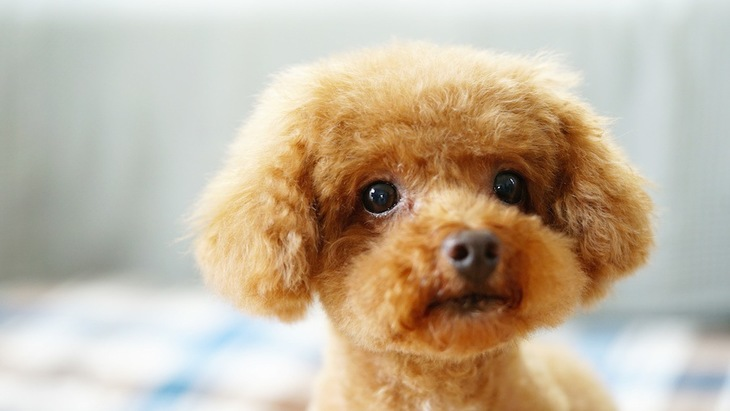 犬がハウスダストアレルギーになっている時の症状と主な原因、対処法