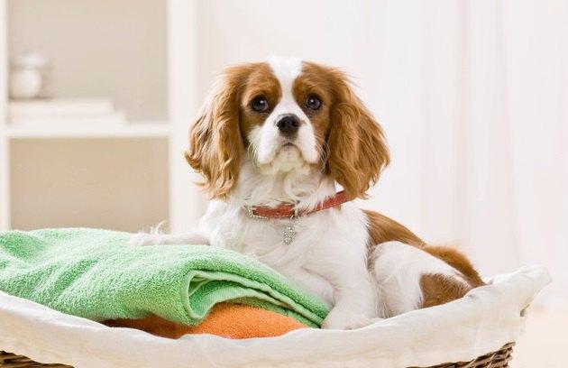 せっかく洗ったのに…犬が洗濯物の上でゴロゴロする心理
