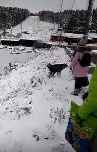 凍った川にはまった犬を救ったのは、ゴムボート、ロープ、機転と勇気