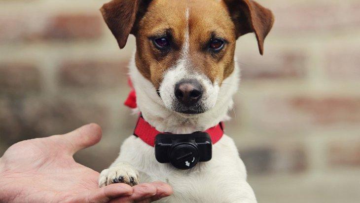 犬の無駄吠え防止の首輪でオススメのグッズとしつけの方法