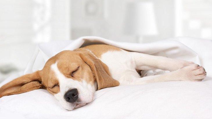 ゆっくり眠れてる?犬の6つの寝相から分かる安眠度
