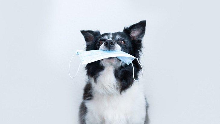犬がマスクを誤飲するトラブル多発中!食べてしまったときの適切な対処法とは