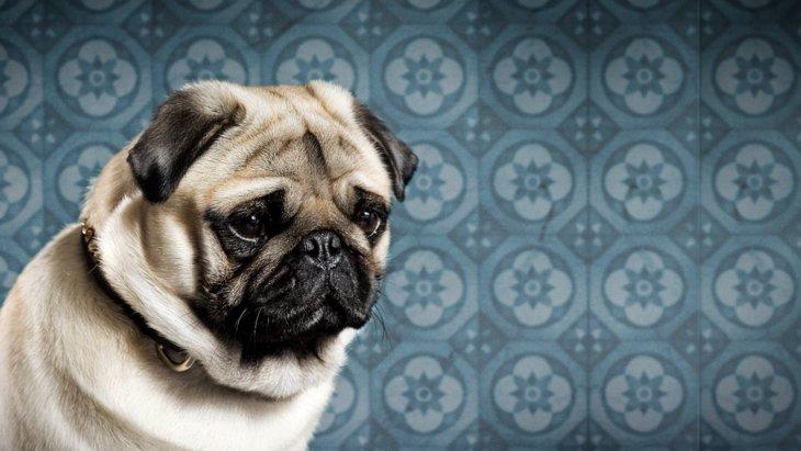 犬が悲しい気持ちになっている『飼い主の行動』5選