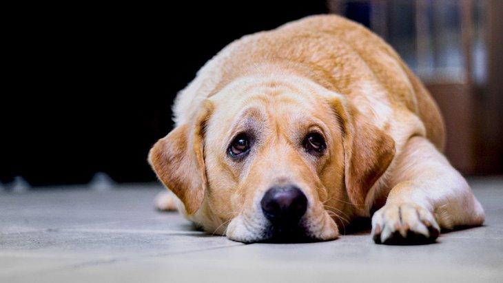 犬が『自信喪失』している時の4つの行動とは?正しい対応方法まで解説