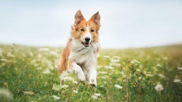 犬は『暑い季節』と『寒い季節』のどっちが過ごしやすいの?