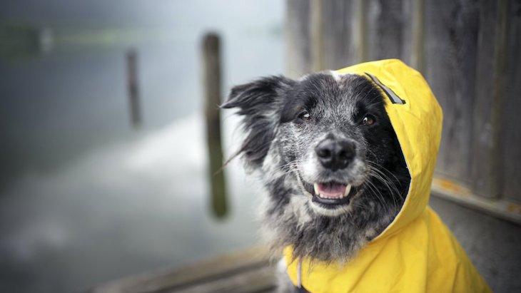 愛犬との同伴避難の実情としておくべき準備