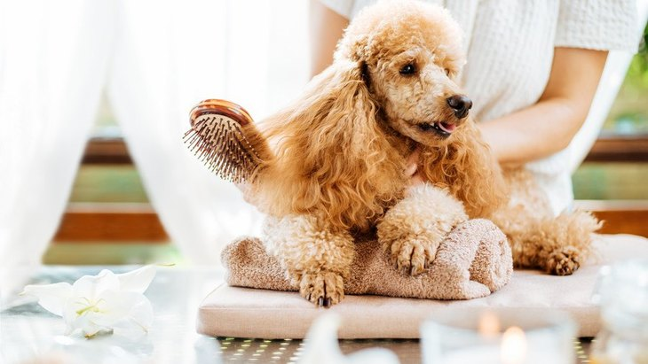 犬の『毛並みが悪くなってしまう』NG行為3選!キレイを保つお手入れとは?