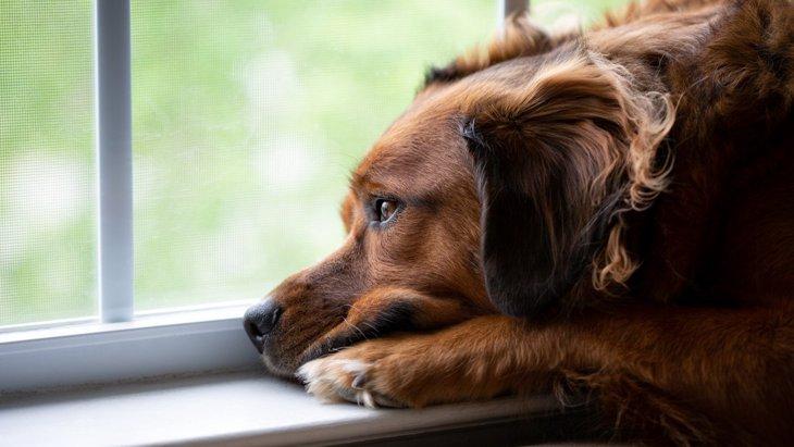 犬が『寂しかった』と飼い主に伝えている5つのサイン