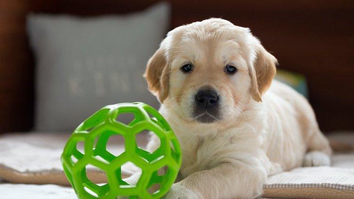 犬が人を遊びに誘っている時の仕草や行動5つ