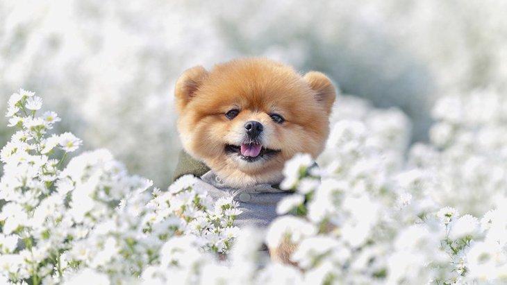 愛犬との生活に活かそう!ペットにまつわる資格や検定
