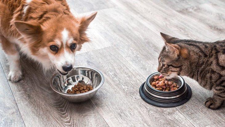 ペットフードの匂いが飼い主の感情に影響を及ぼす!【研究結果】