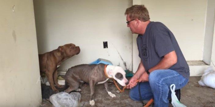 ごみ屋敷で犬を保護!あわてん坊と慎重派の仲良し2頭でした