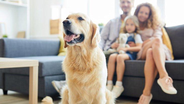犬が家族に抱いている『3つの気持ち』!ママやパパのことはどう思っている?