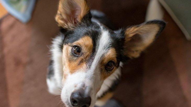 犬が飼い主に『お願い』をしている時の仕草や態度4選