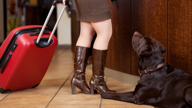 大切なペットを預けるのは、ペットホテル?それともシッター?
