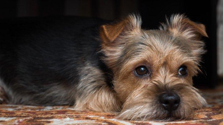 犬が寂しいときにする4つの行動と対処法