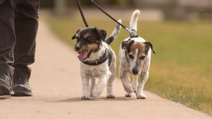 犬にも筋トレが必要?その理由やおすすめの筋トレ方法を解説