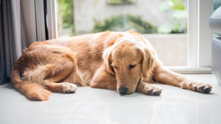 ストレスが溜まってるかも!気をつけたい犬の「自傷行為」3つ