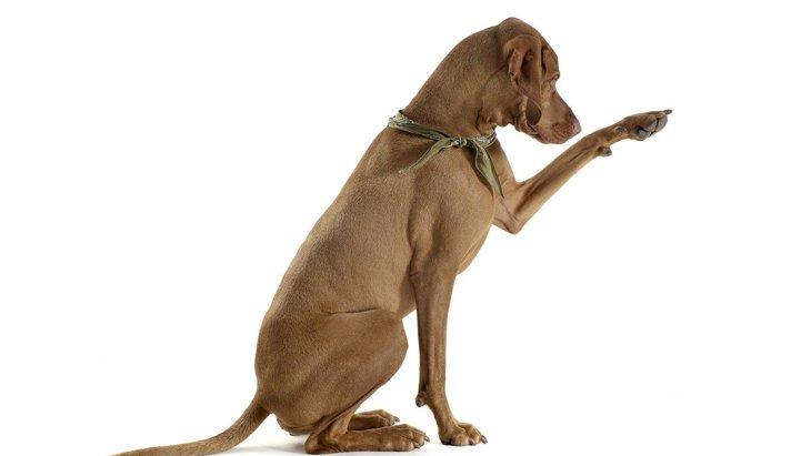 犬の『足の筋肉が衰える』原因2選!考えられる症状と治療法とは