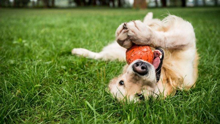 『お金がない人』は犬を飼うべきではない?考えられる4つのリスク