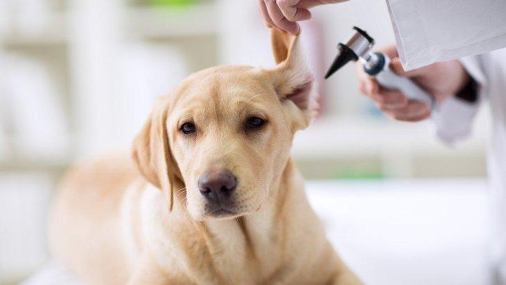気をつけるべき犬の『耳垢』とは?