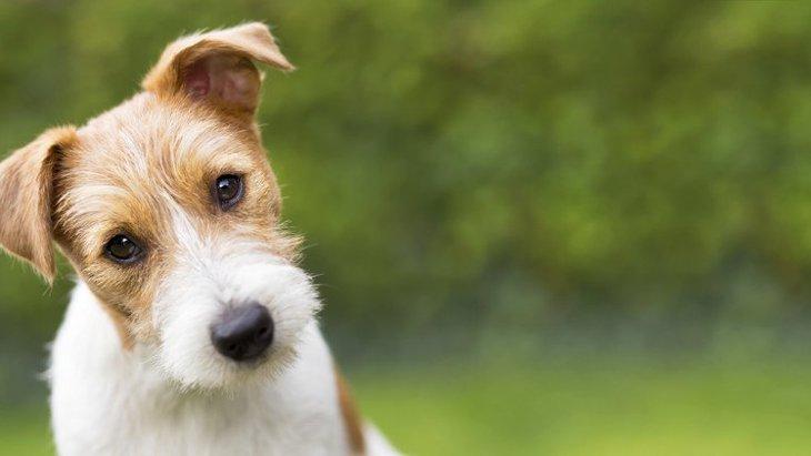 犬の耳から液体が出た!考えられる病気と治療方法