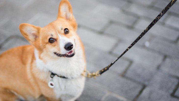 ついついやっている、犬の散歩中にやってはいけない行為6選