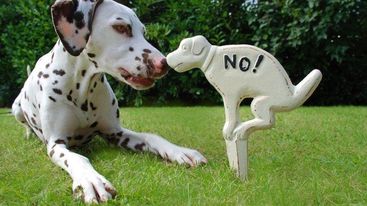 チョークで犬のフン放置をなくす!「イエローチョーク作戦」について