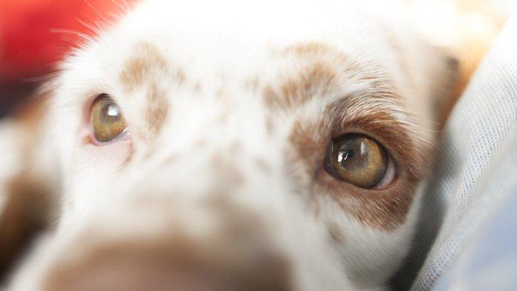犬が目を掻く!考えられる原因と対処法について
