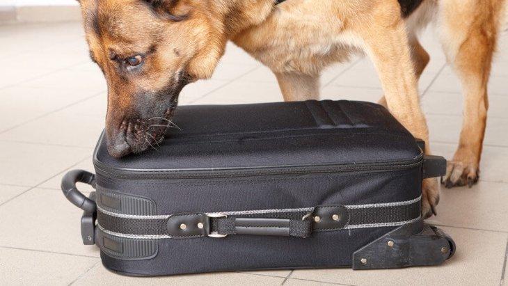 麻薬探知犬について