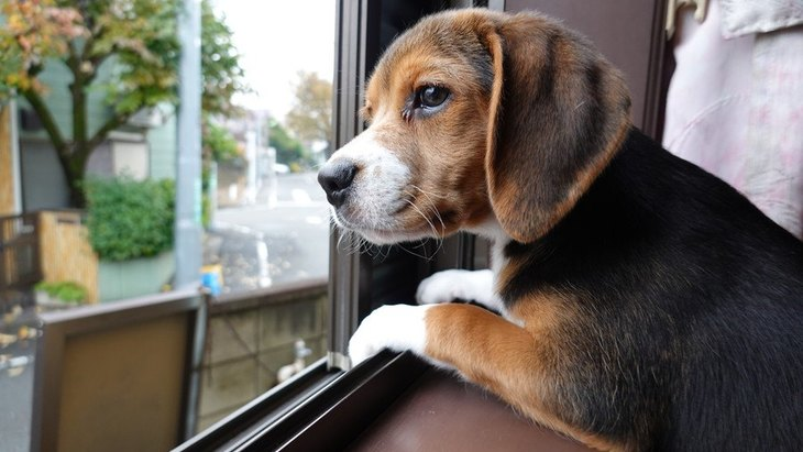 犬との暮らしであり得る『超危険なトラブル』3選
