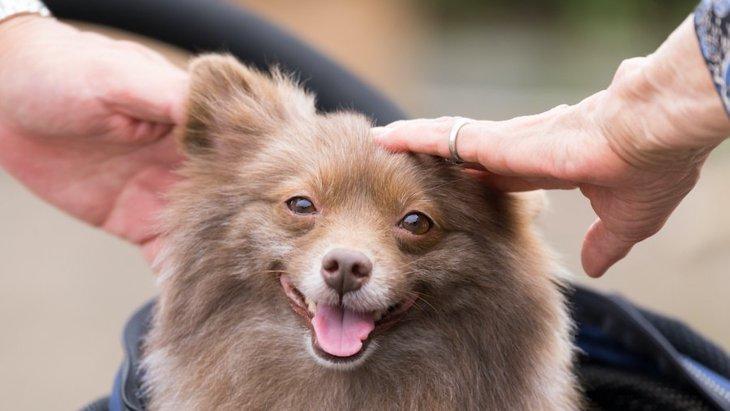 犬は『一度会った人』を覚えてる?どうしたら覚えてもらえるの?