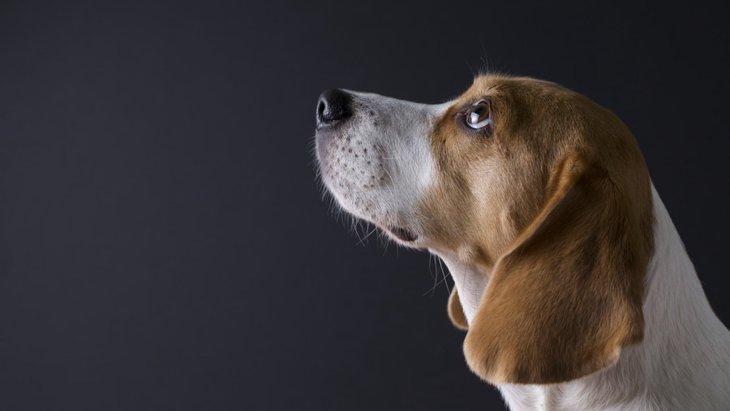 犬は明るいところと暗いところ、どっちが好きなの?