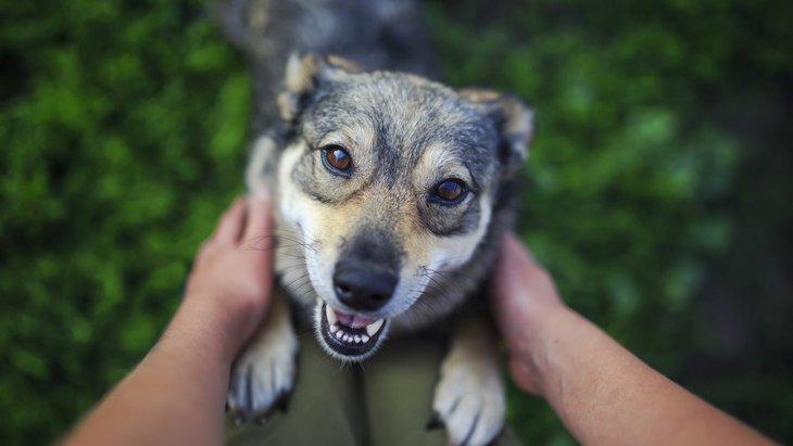 犬にも自分のペースがある!犬との適度な『距離感』を考えてみよう