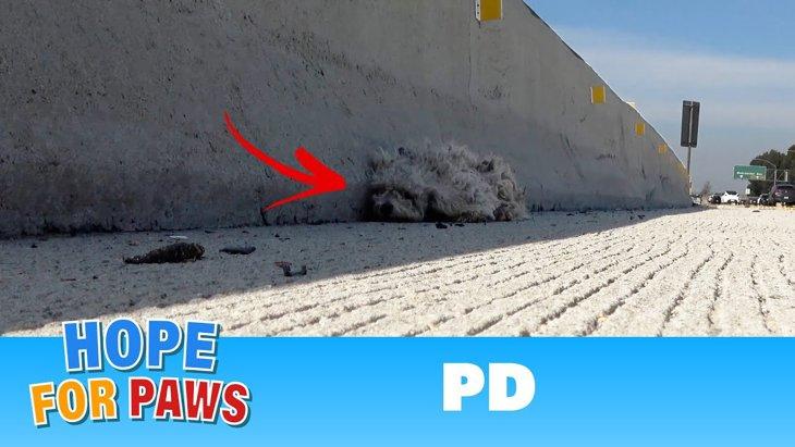 高速道路にうずくまる犬!協力してくれた地元警察に感謝!