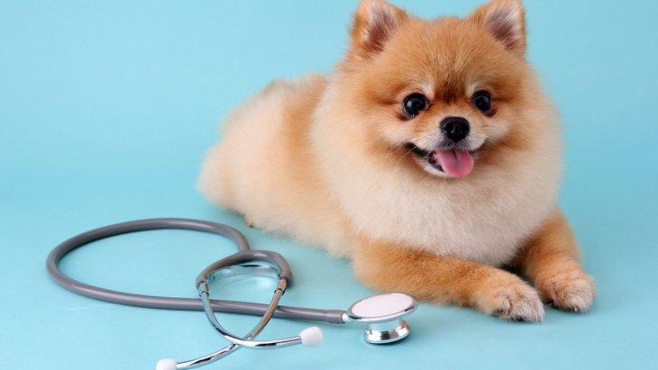 小型犬が震えてしまう理由4選!寒くもないのになぜ?病気の可能性は?