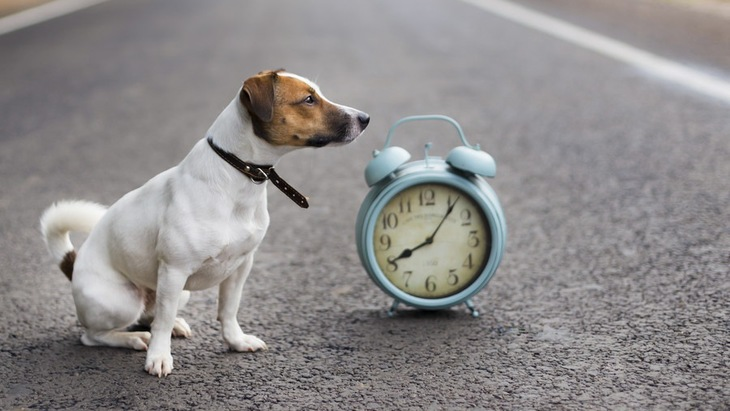 犬の散歩って毎日行く必要あるの?理想的な頻度や時間とは