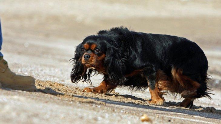 犬が頭を下げながら近づいてくるときの心理とは?