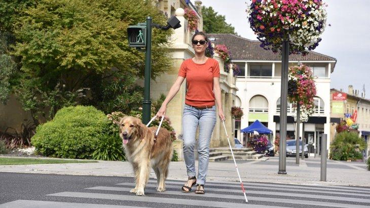 街で盲導犬を見かけたら~注意したい3つのこと~