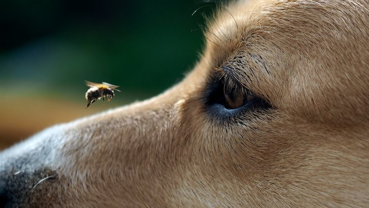 犬の虫刺されは命に関わる危険性も!刺されると危険な虫や予防方法まで