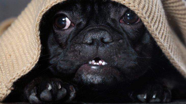 犬に絶対してはいけない『間違い行動』5選!うっかりではすまされないことも…!