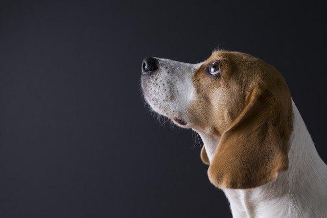 犬と人の脳はどう違う?大きさや記憶力などの違いは?