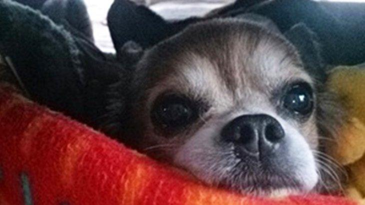 どんな保護犬もピカピカ犬にする個人ボランティアさんをご紹介します